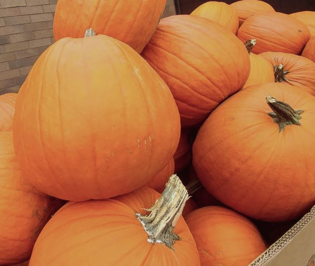 kimberley_pumpkins_halloween_spiritedtable_photo2.jpg