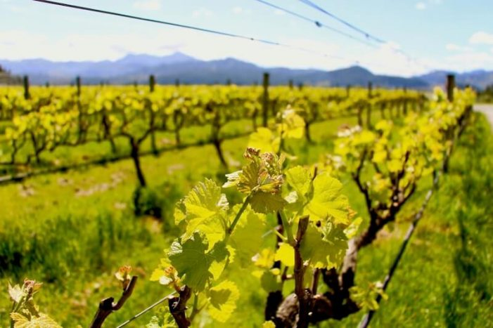 nelson_new-zealand-wine-guide-701x467.jpg