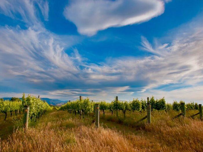 marlborough_new-zealand-wine-guide-701x526.jpg