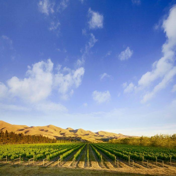 canterbury_new-zealand-wine-guide-701x701.jpg