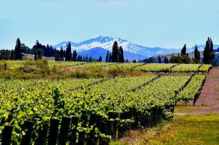 waitaki_new-zealand-wine-guide-701x464.jpg