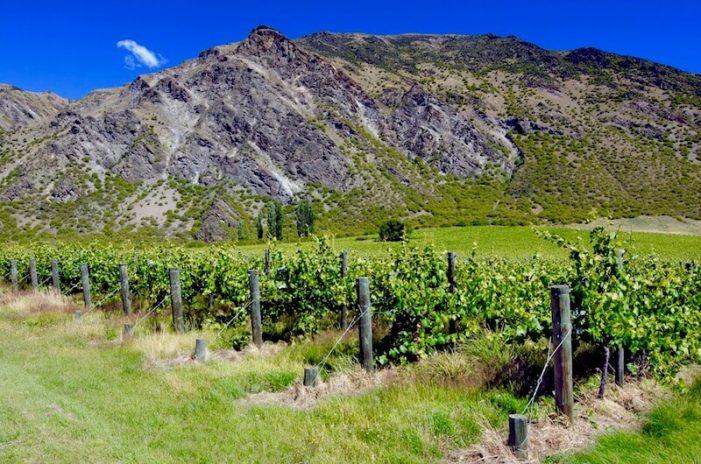 otago_new-zealand-wine-guide-701x464.jpg