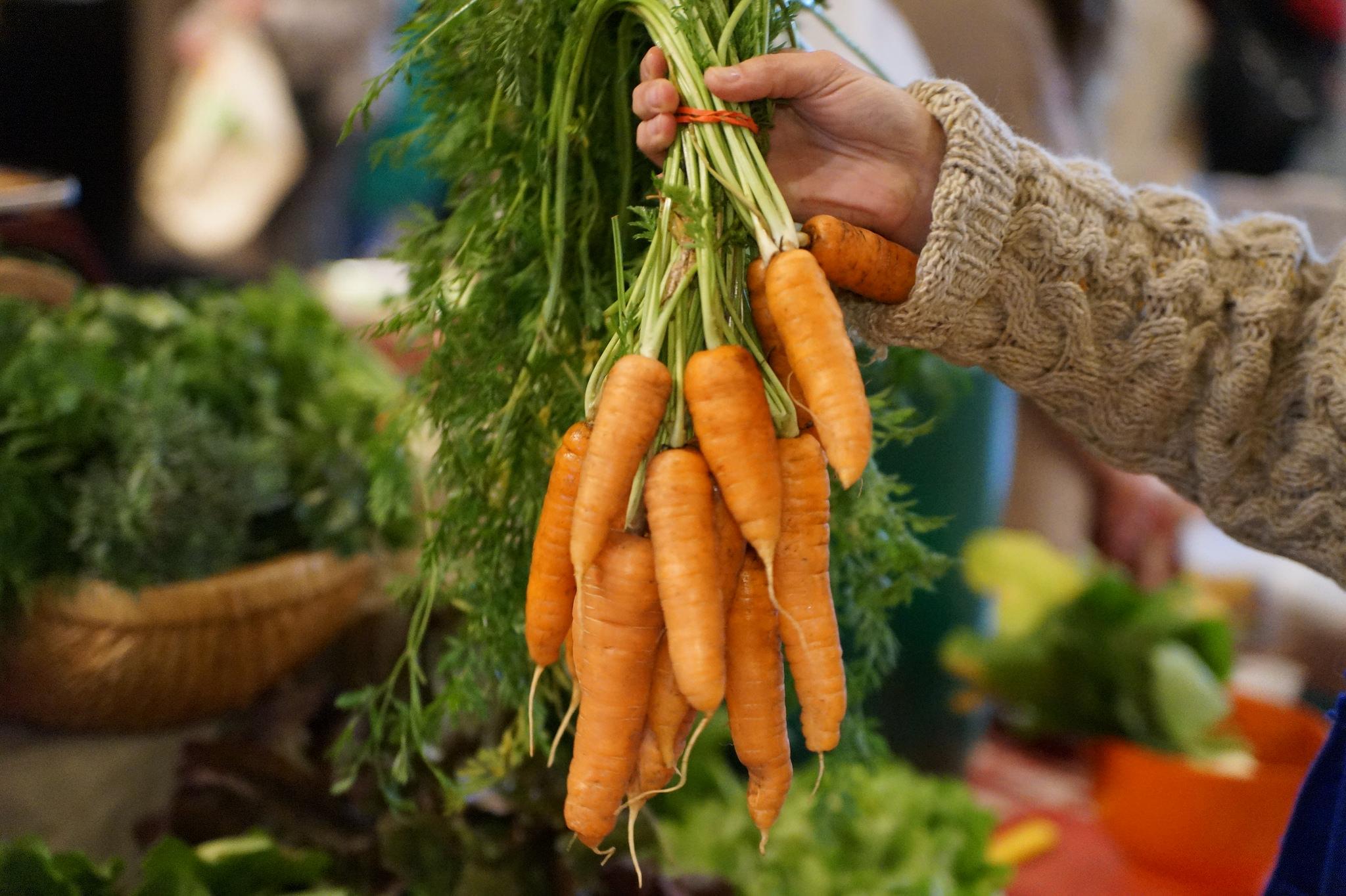 carrots-in-hand-indoor-winter.jpg