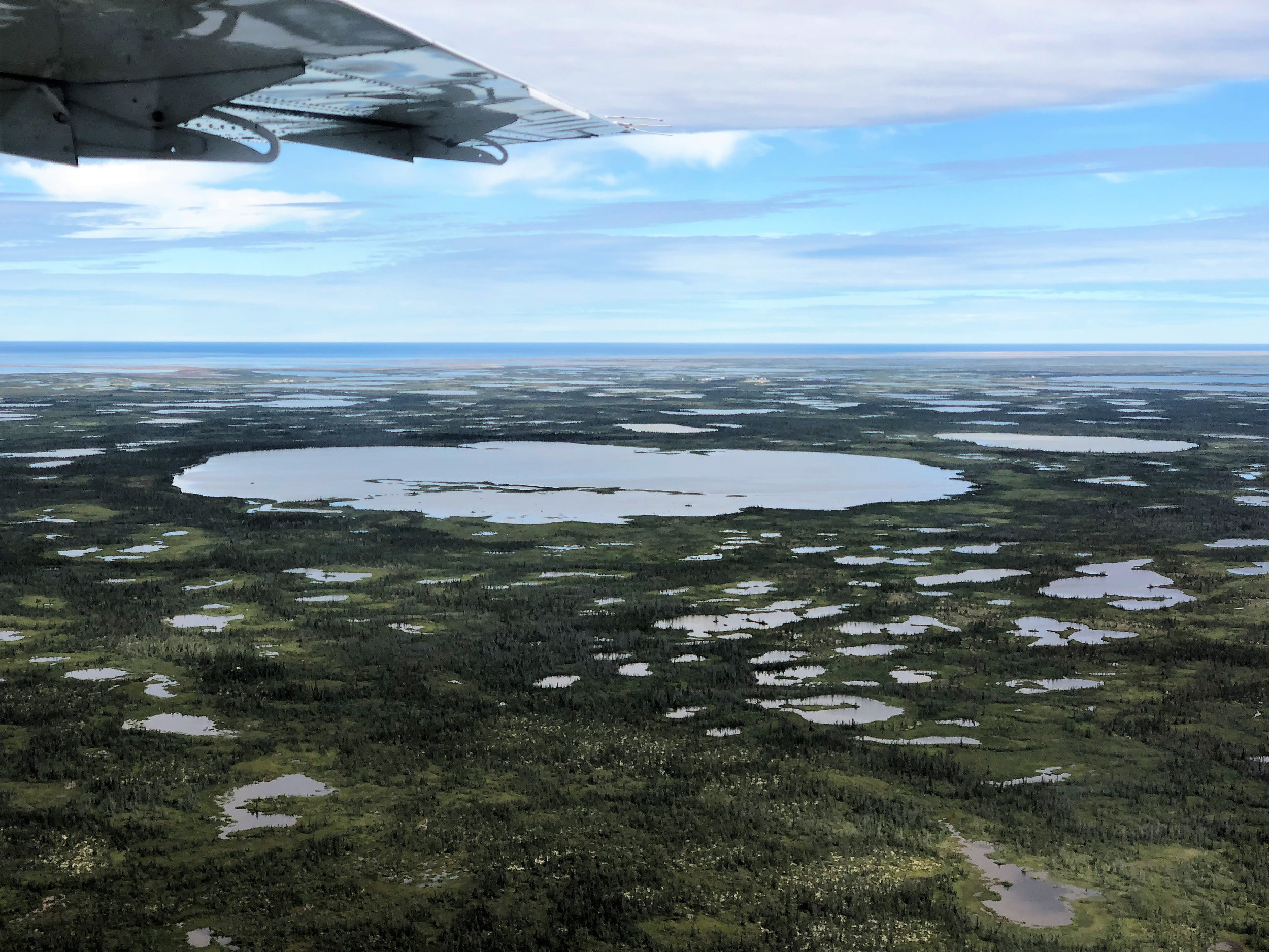 teri_arctic_snorkeling_whales_spiritedtable14.jpg