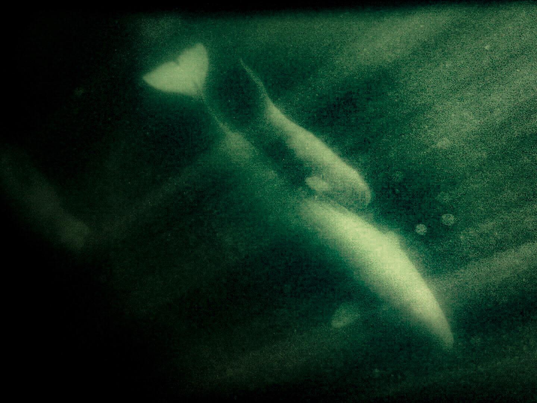 teri_arctic_snorkeling_whales_spiritedtable04.jpg