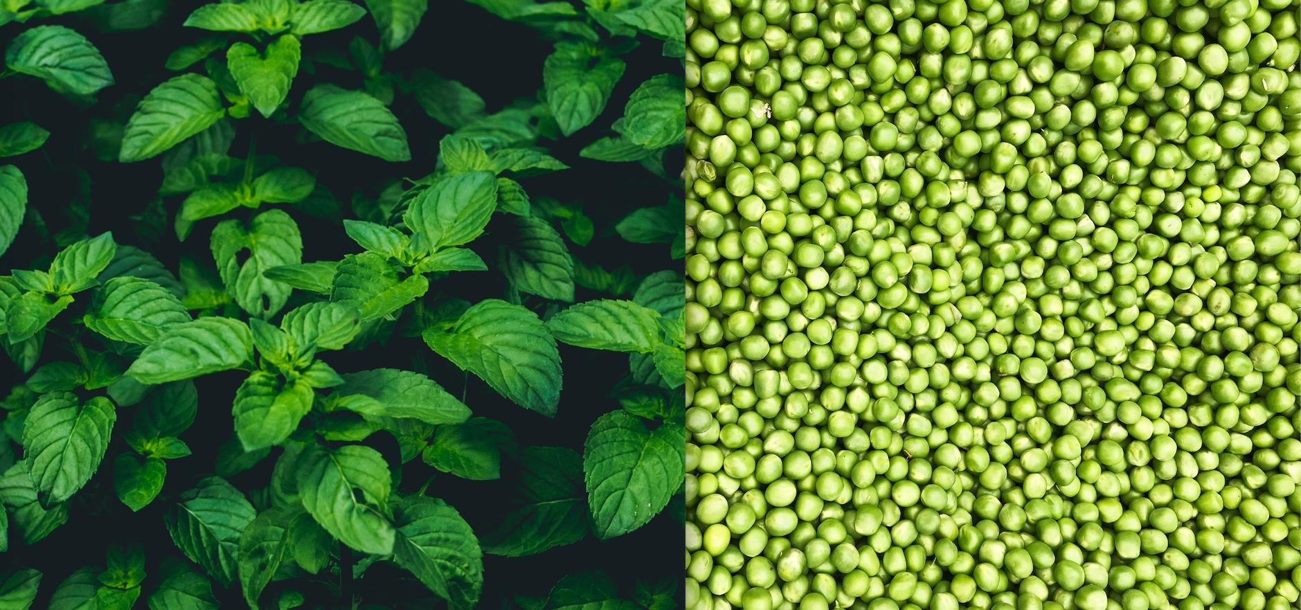 Peas Photo by  Rebecca Orlov | Orlov Design Co  on  Unsplash  +  Mint Photo by Marko Blažević on Unsplash