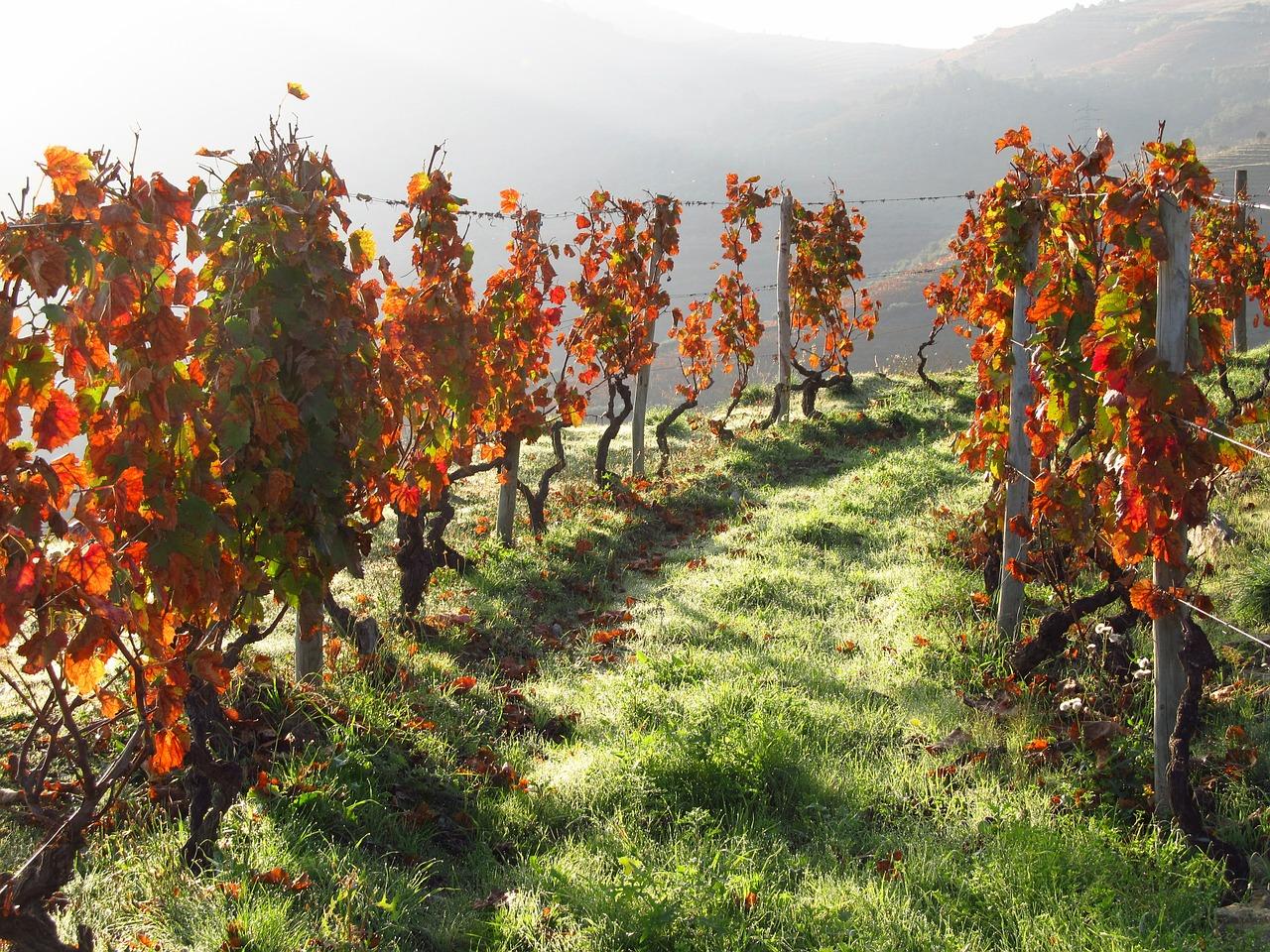 douro-vineyard.jpg