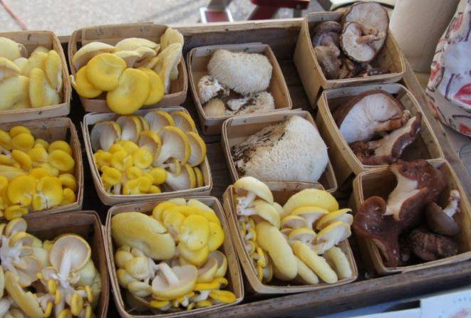 mushrooms-cthm-1024x576.jpg
