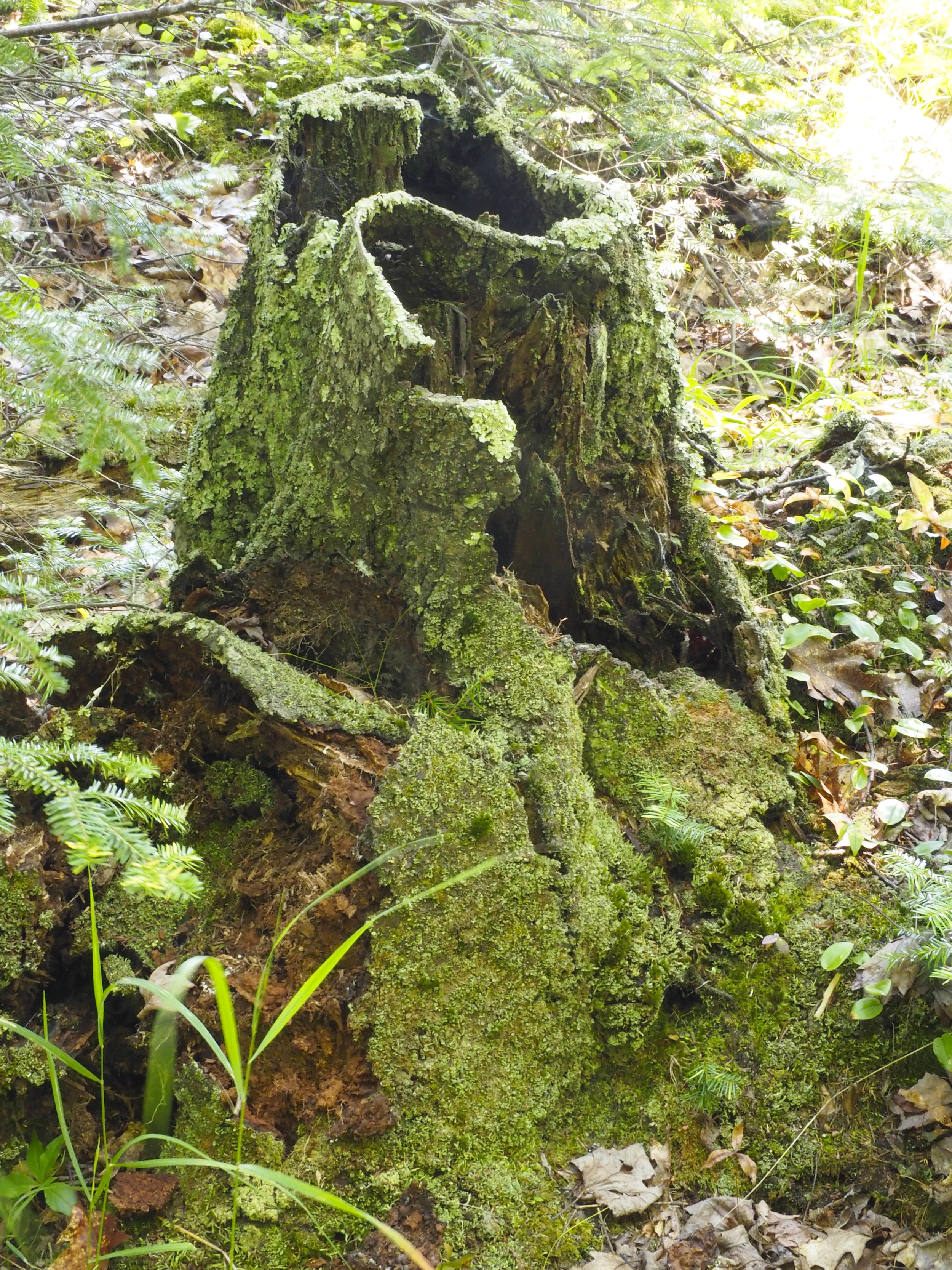 cindi_Madeline_NationalForest_Bog_spiritedtable_photo01.jpg