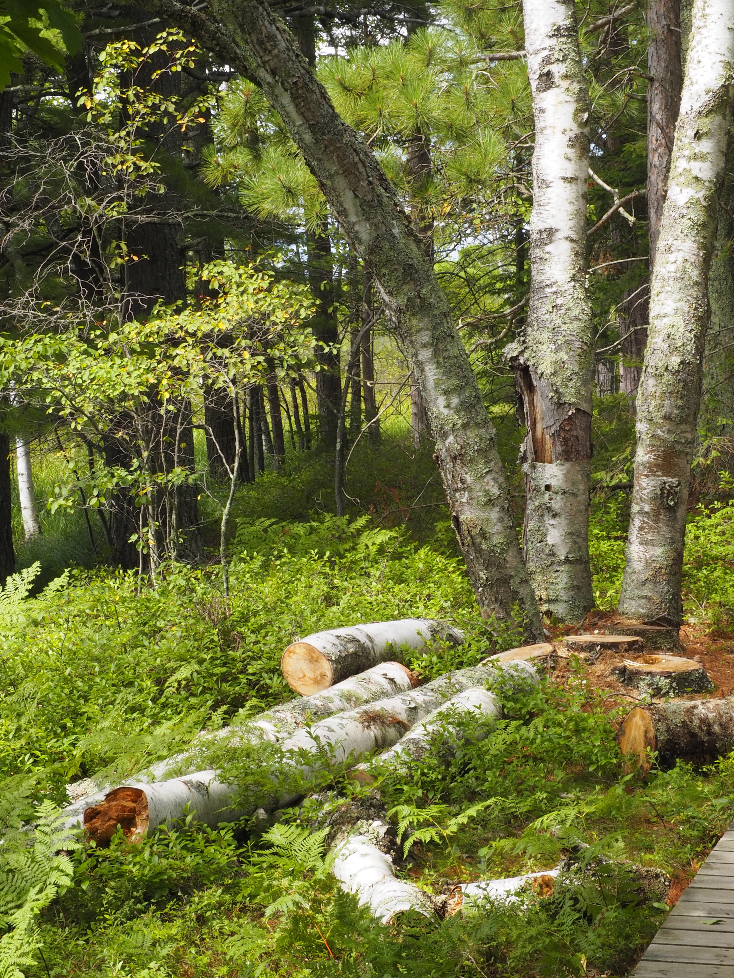cindi_Madeline_NationalForest_Bog_spiritedtable_photo07.jpg