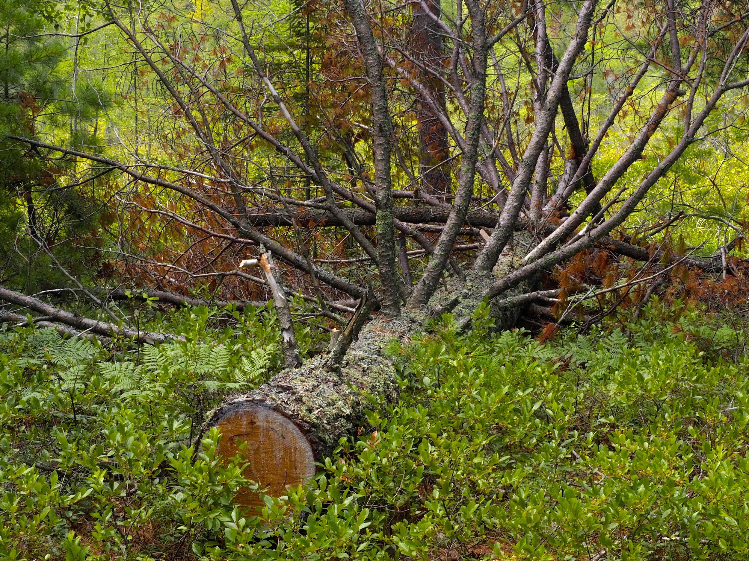 cindi_Madeline_NationalForest_Bog_spiritedtable_photo05.jpg