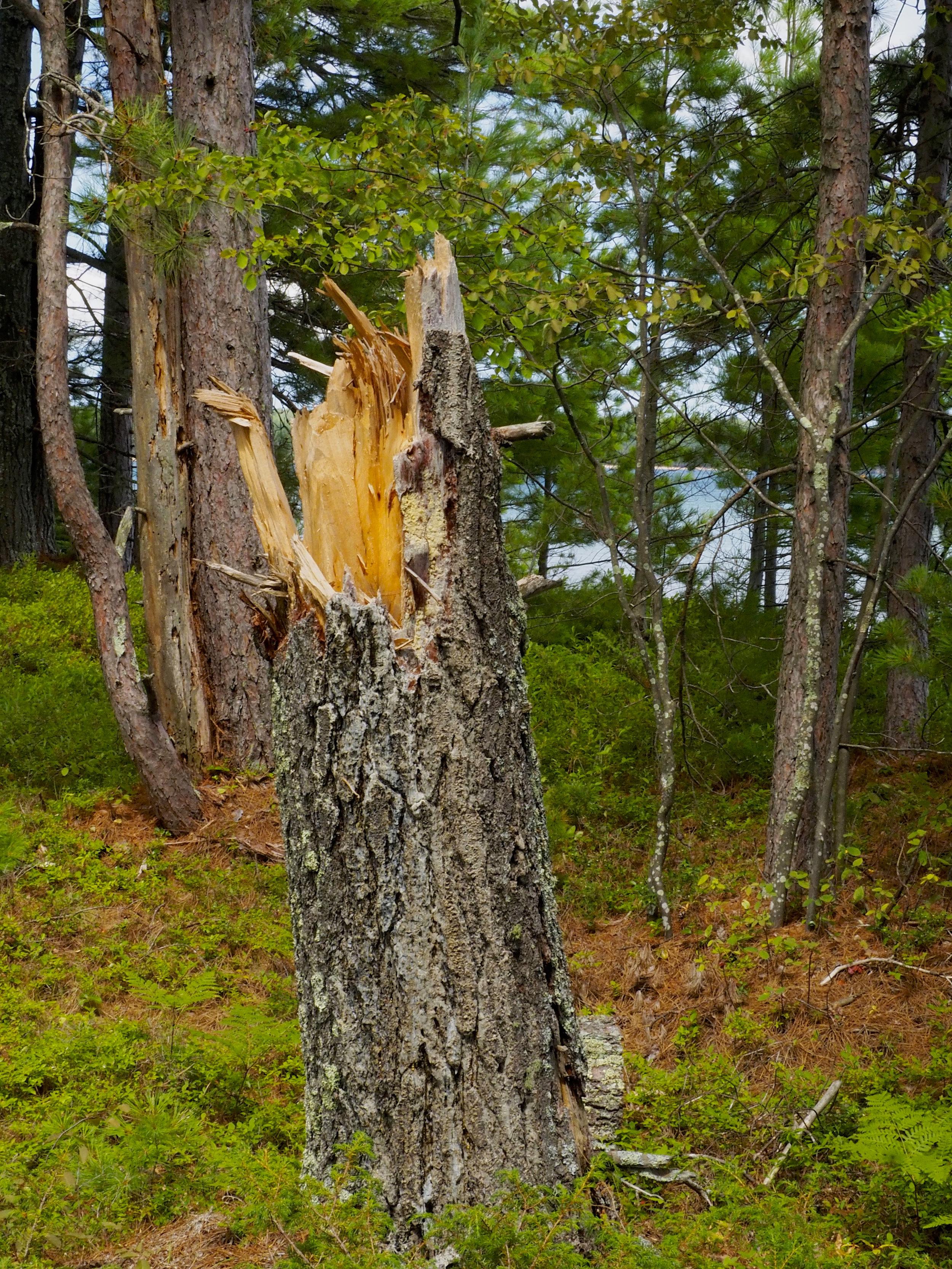 cindi_Madeline_NationalForest_Bog_spiritedtable_photo06.jpg