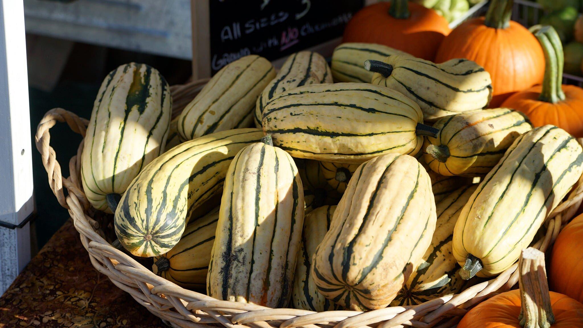 delicata squash and pumpkins.jpg