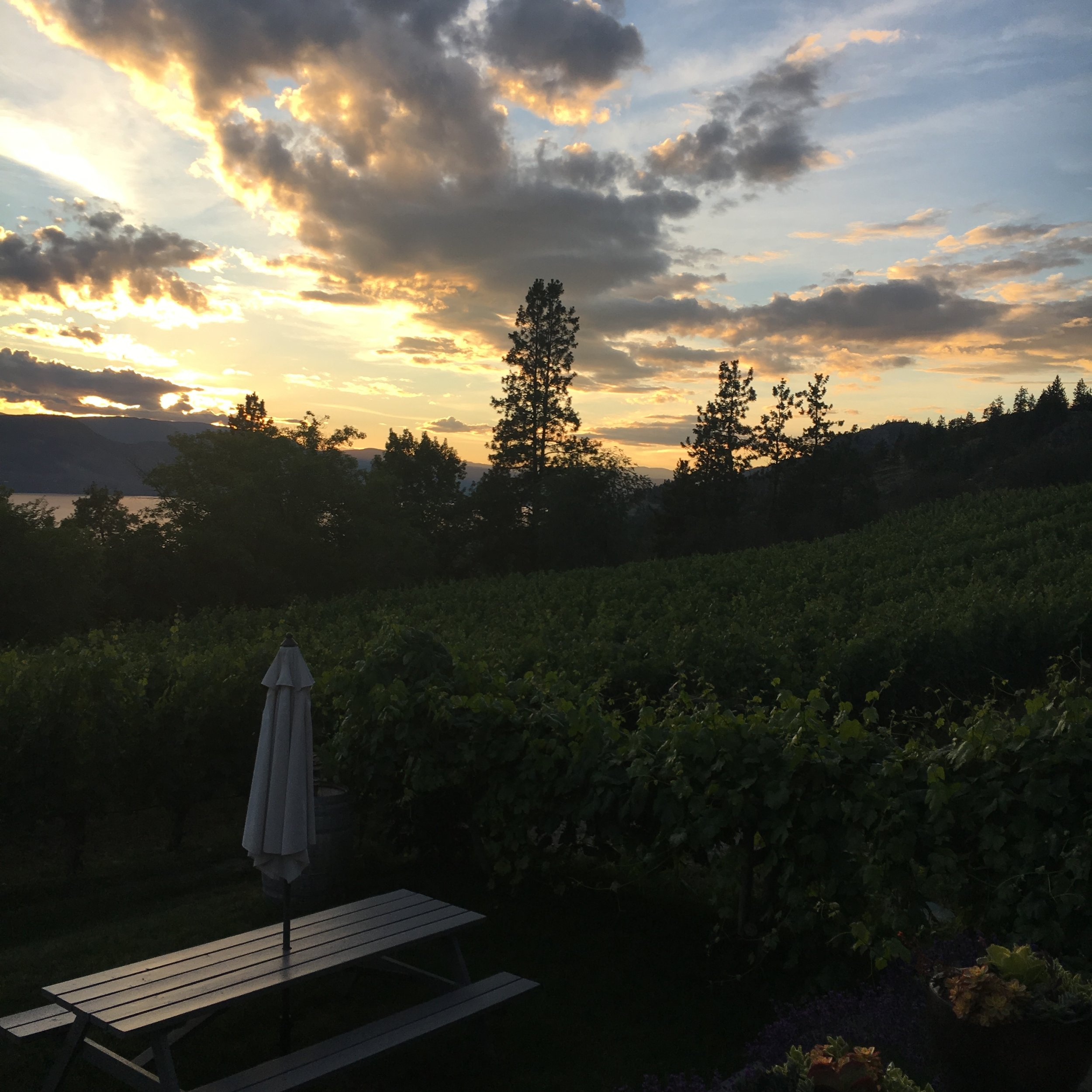 Sunset at Nichol Vineyard on the Naramata Bench