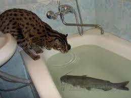 bathtub fish.jpg