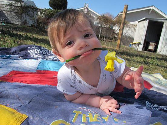 daffodils-4-8-14.jpg