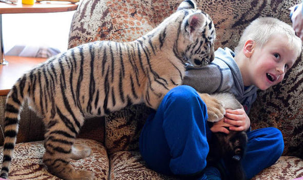 Pet Tigers seem to be a thing . . .