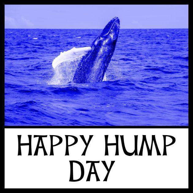 HappyHumpDay whale.jpg