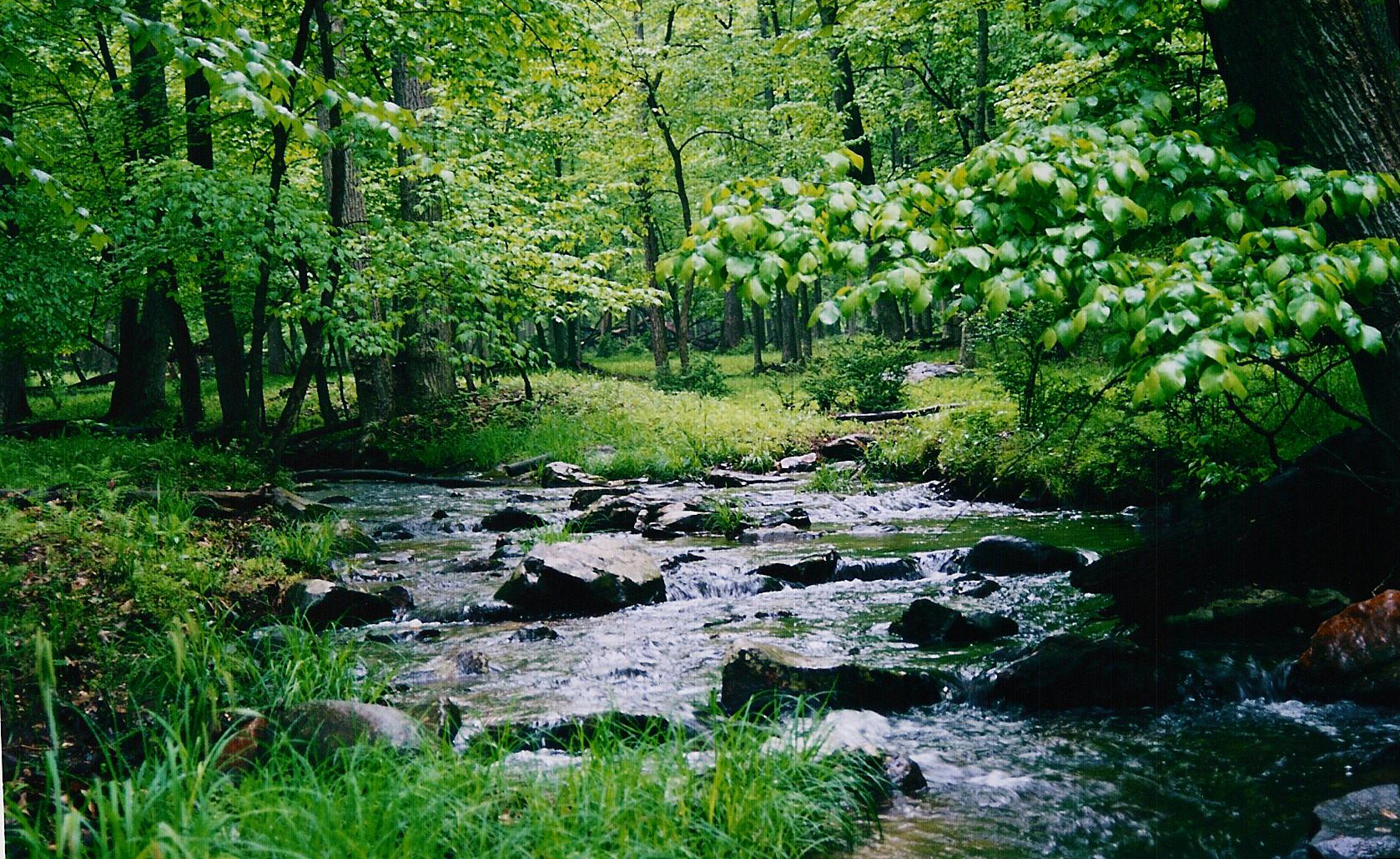 stream through trees 2, June 2003 - h. richards, 2003.JPG