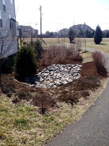 The final result of Potomac Conservancy's and HLI's stormwater management site repair.