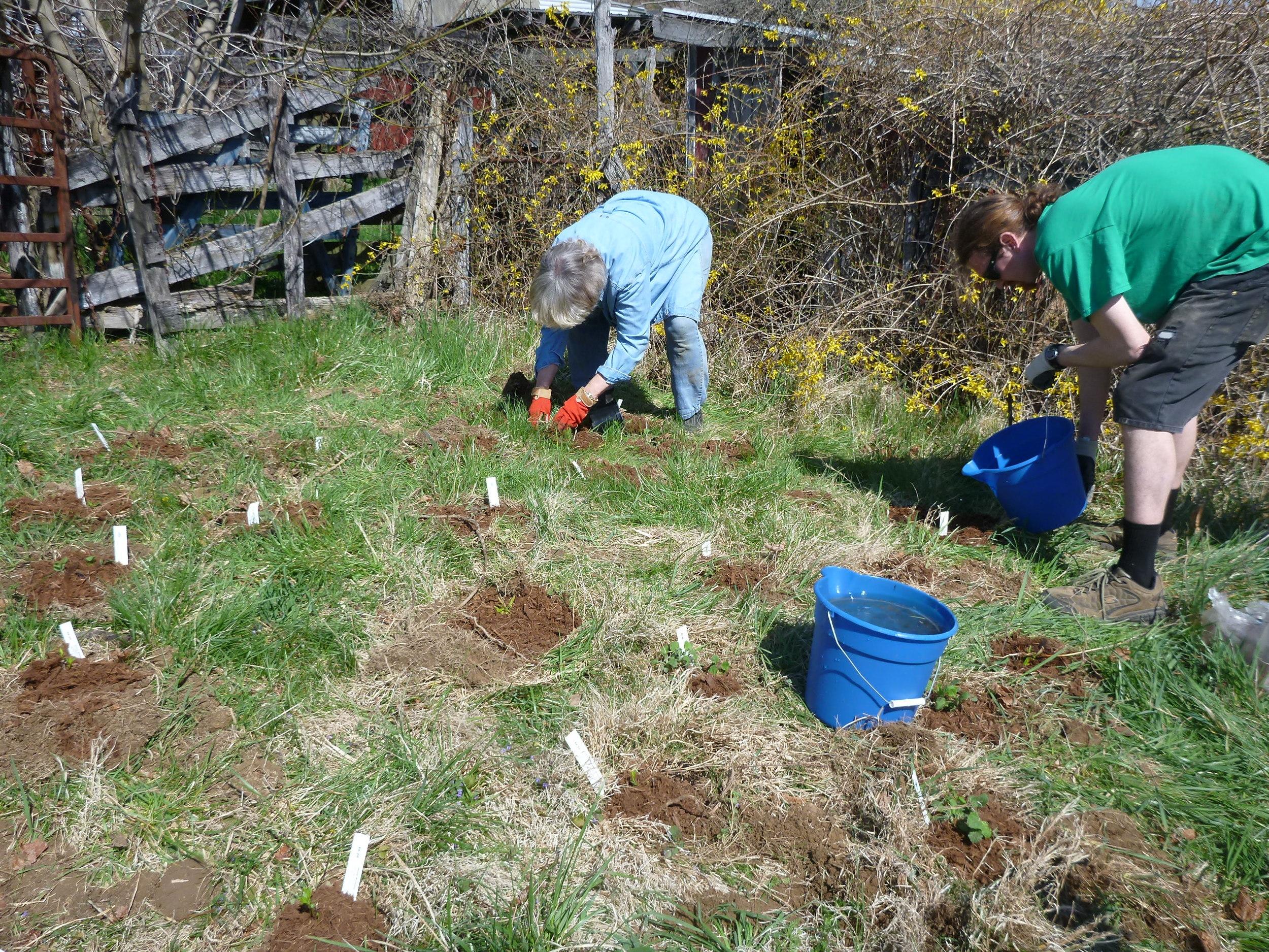 Kristin (Left) and Joe (right), a recent Appalachian Trail thru-hiker,planting a monarch waystation.