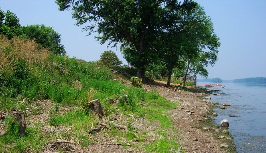 stumps along the Potomac shoreline at Trump National Golf Club in Potomac Falls, VA.