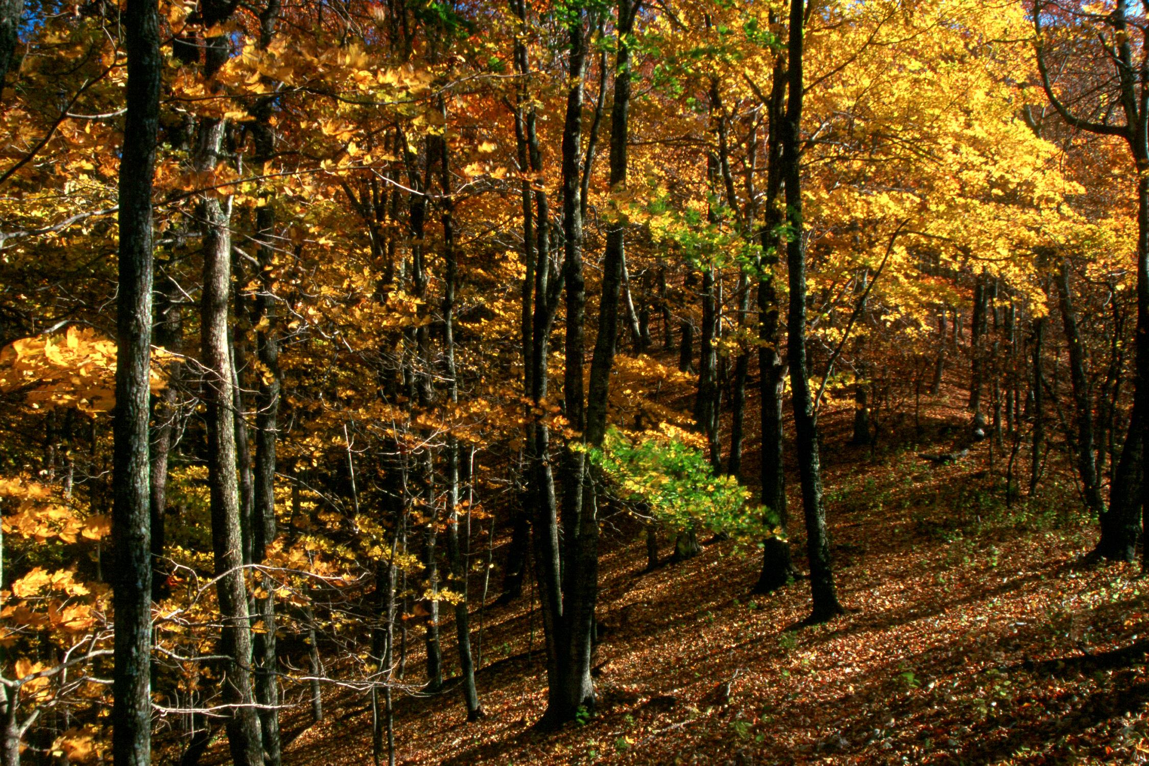 fall along shenandoah mtn trail - ed neville, 2002.JPG