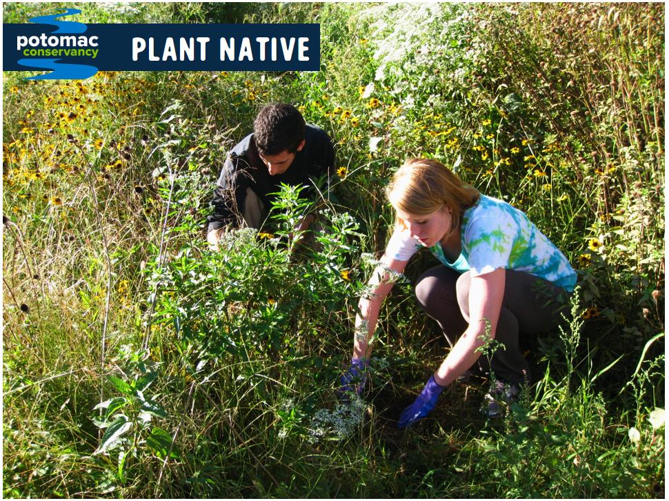 native plants clean water potomac river
