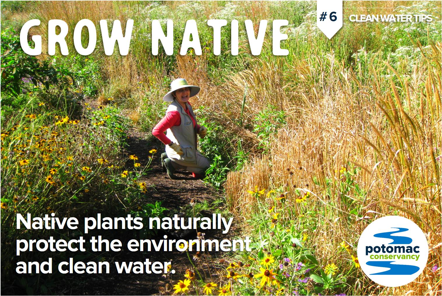 native plants potomac river