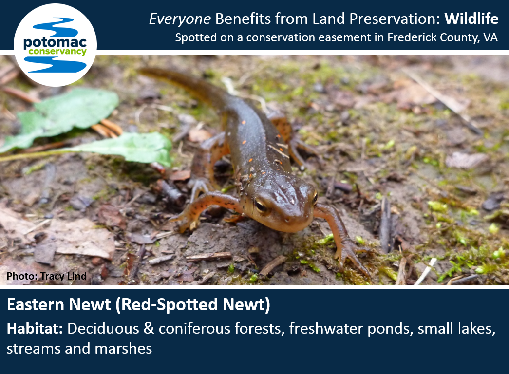newt full.PNG