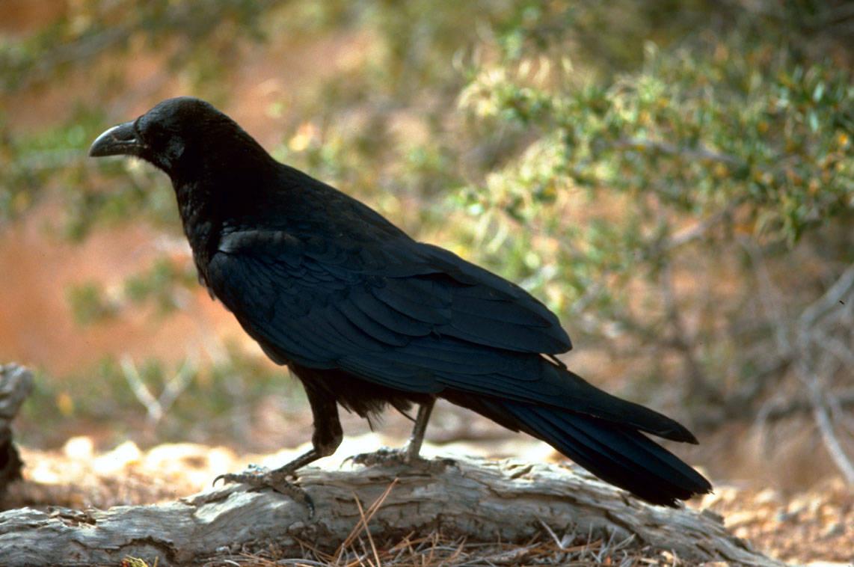 raven washington dc potomac river