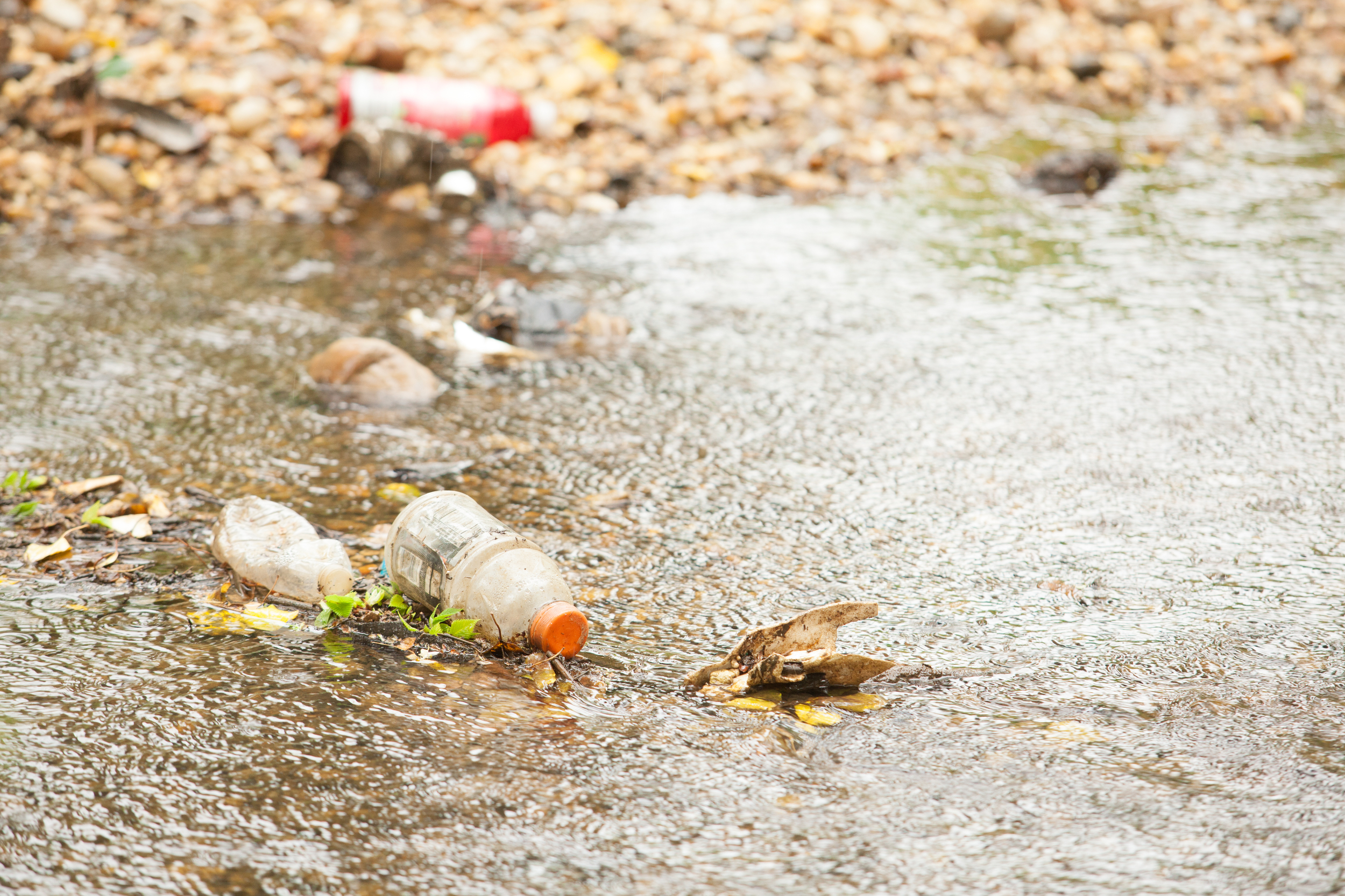 Photo of Trash at Kenilworth Park and Aquatic Gardens from the Chesapeake Bay program,.
