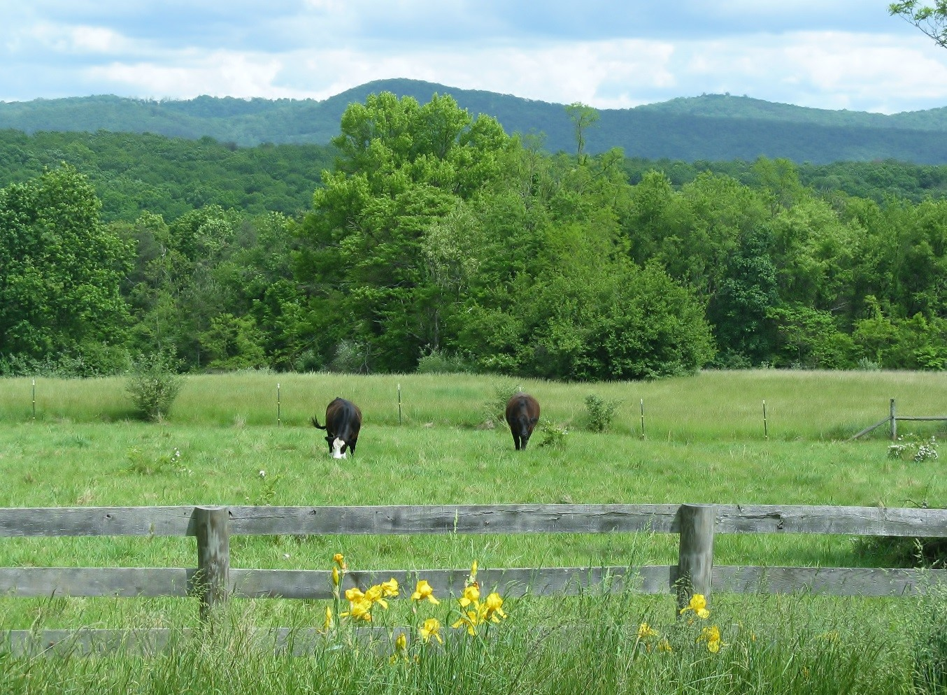 Private conservation easement, Hampshire County, West Virginia. Emily Warner, 2012.