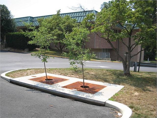 Tree box filter
