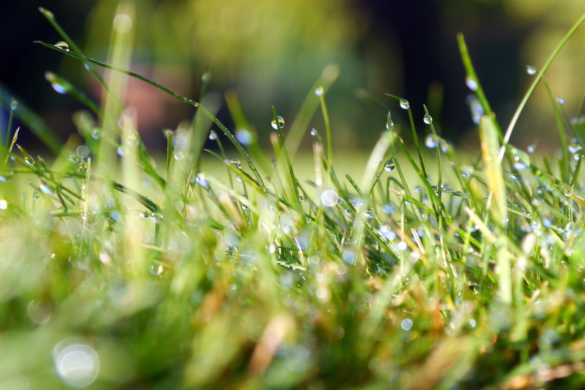 Grass-Blades-of-Green.jpeg