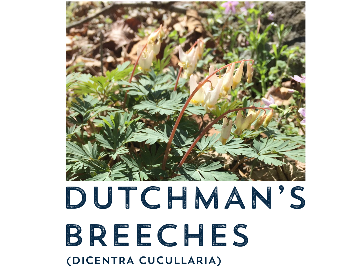dutchman.PNG