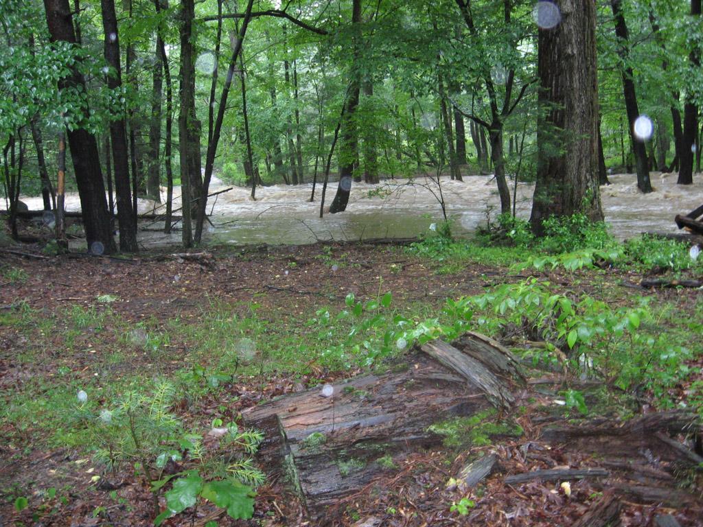 Bear Garden Run near Cross Junction, VA, June 4, 2018 | Carl, Frederick County, VA