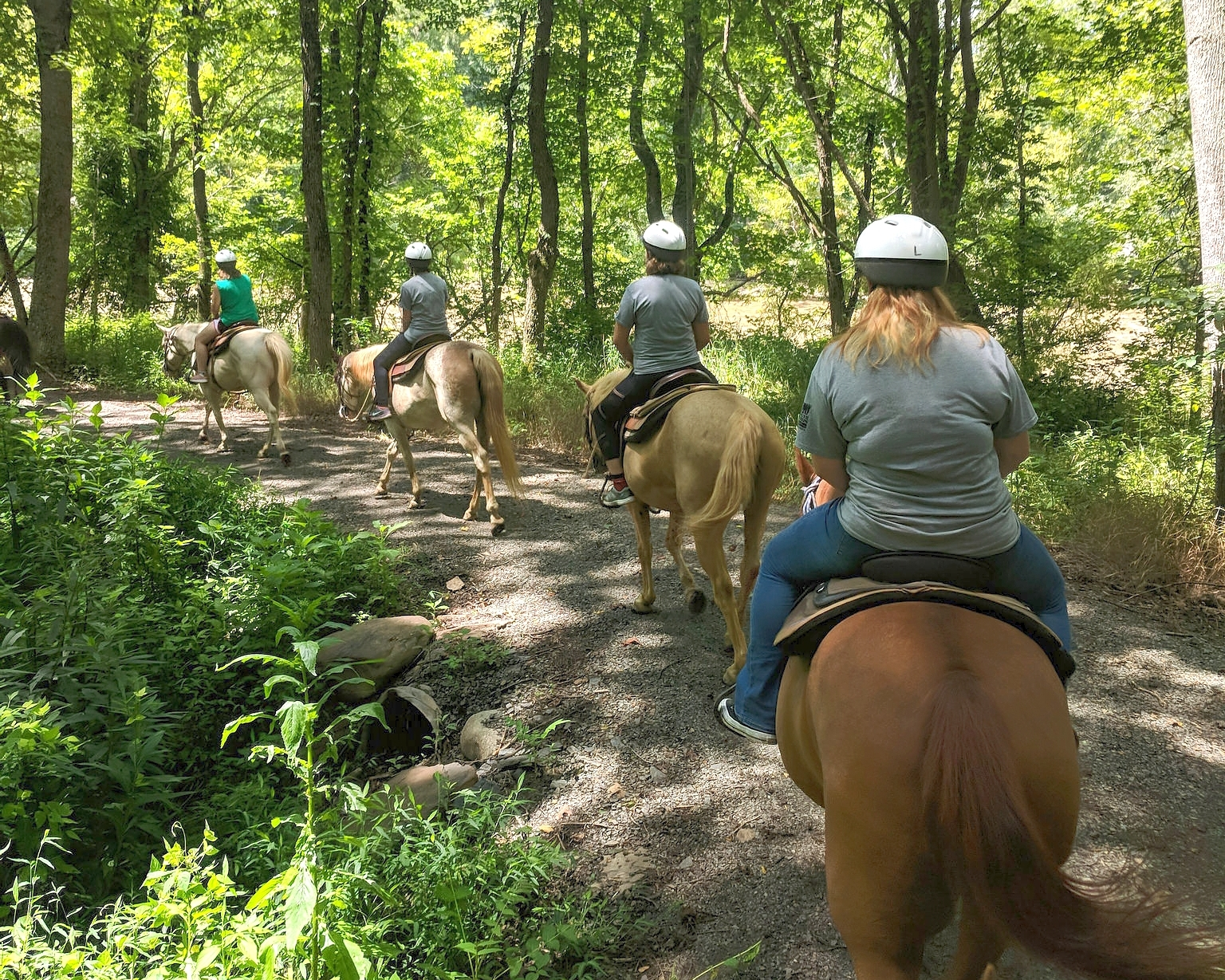 photo courtesy of virginia state parks