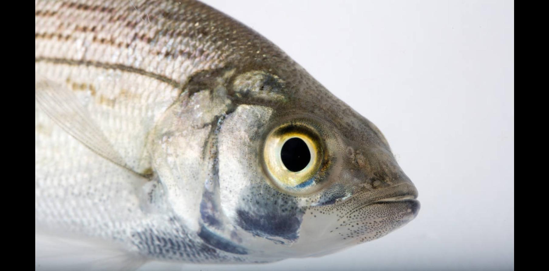 photo courtesy of us fish & wildlife service