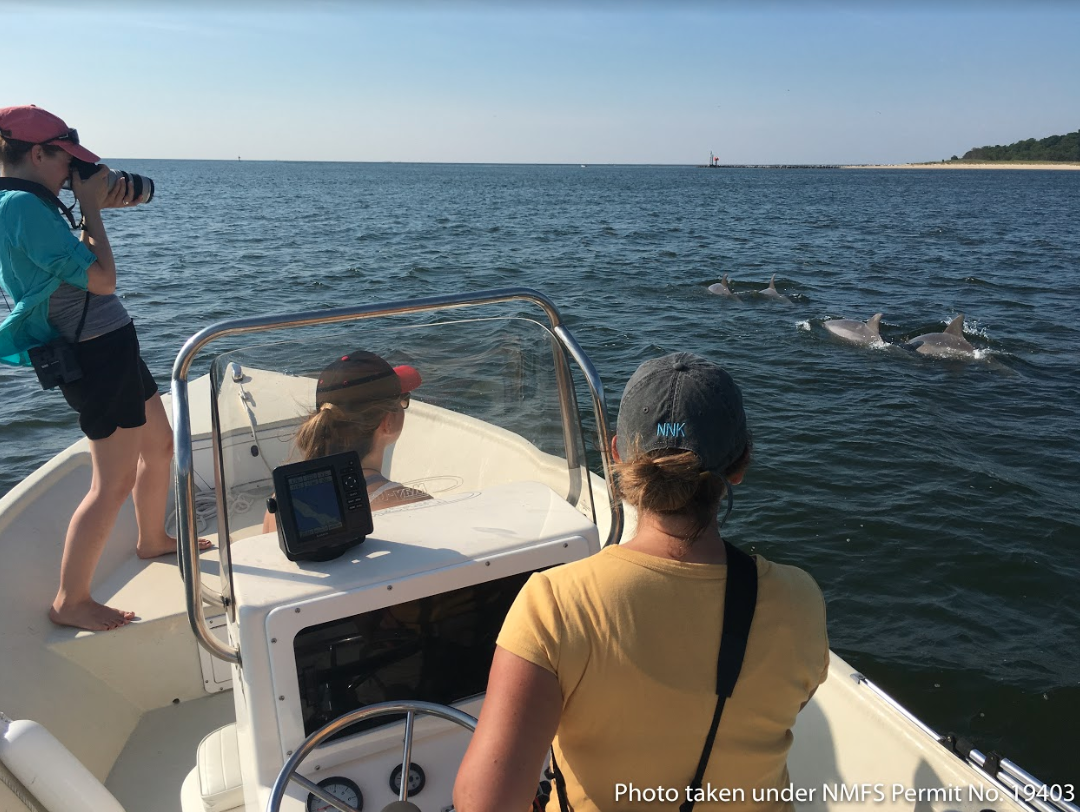 Ann-MaRIE JACOBY AND HER FELLOW RESEARCHERS PHOTOGRAPH DOLPHIN DORSAL FINS FOR IDENTIFICATION. Photo Courtesy of the  Potomac-Chesapeake Dolphin Project .