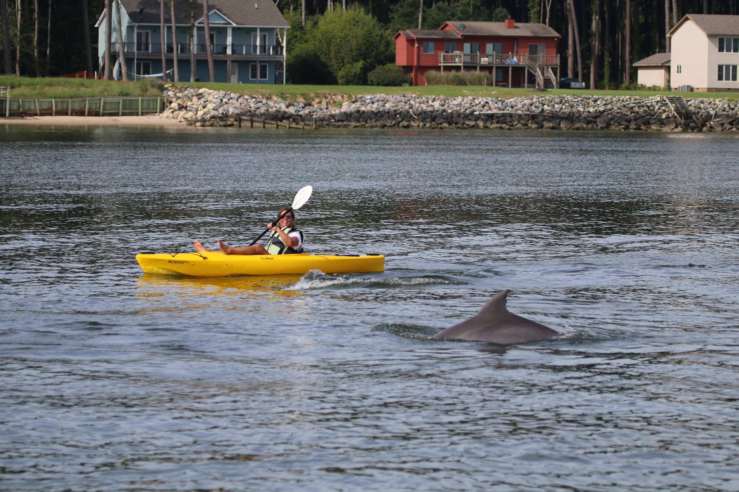 Dr. Janet Mann, DIRECTOR of the PCDP, TRAcks a pod of dolphins in the lower Potomac. Photo Courtesy of the  Potomac-Chesapeake Dolphin Project . (TAKEN UNDER NMFS PERMIT #19403)
