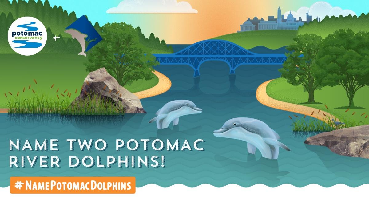 dolphins-socialmeta-1200x657.jpg