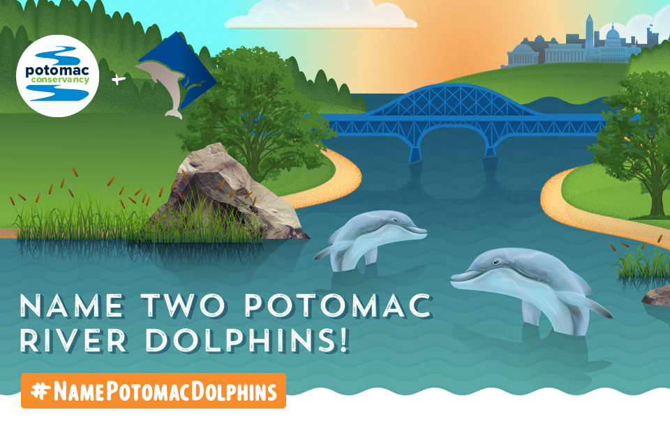 dolphins-form.png