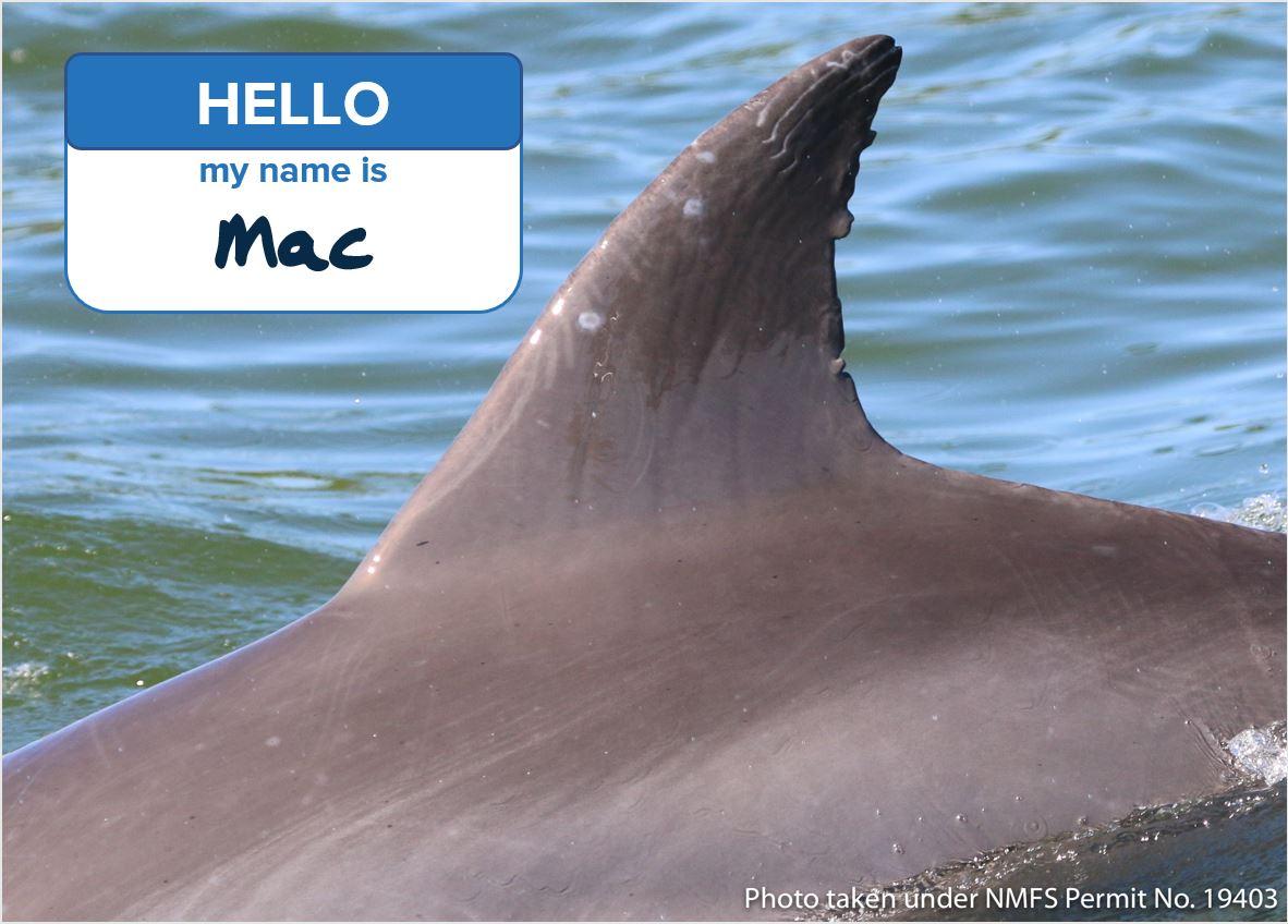 Hello My Name is Mac.JPG