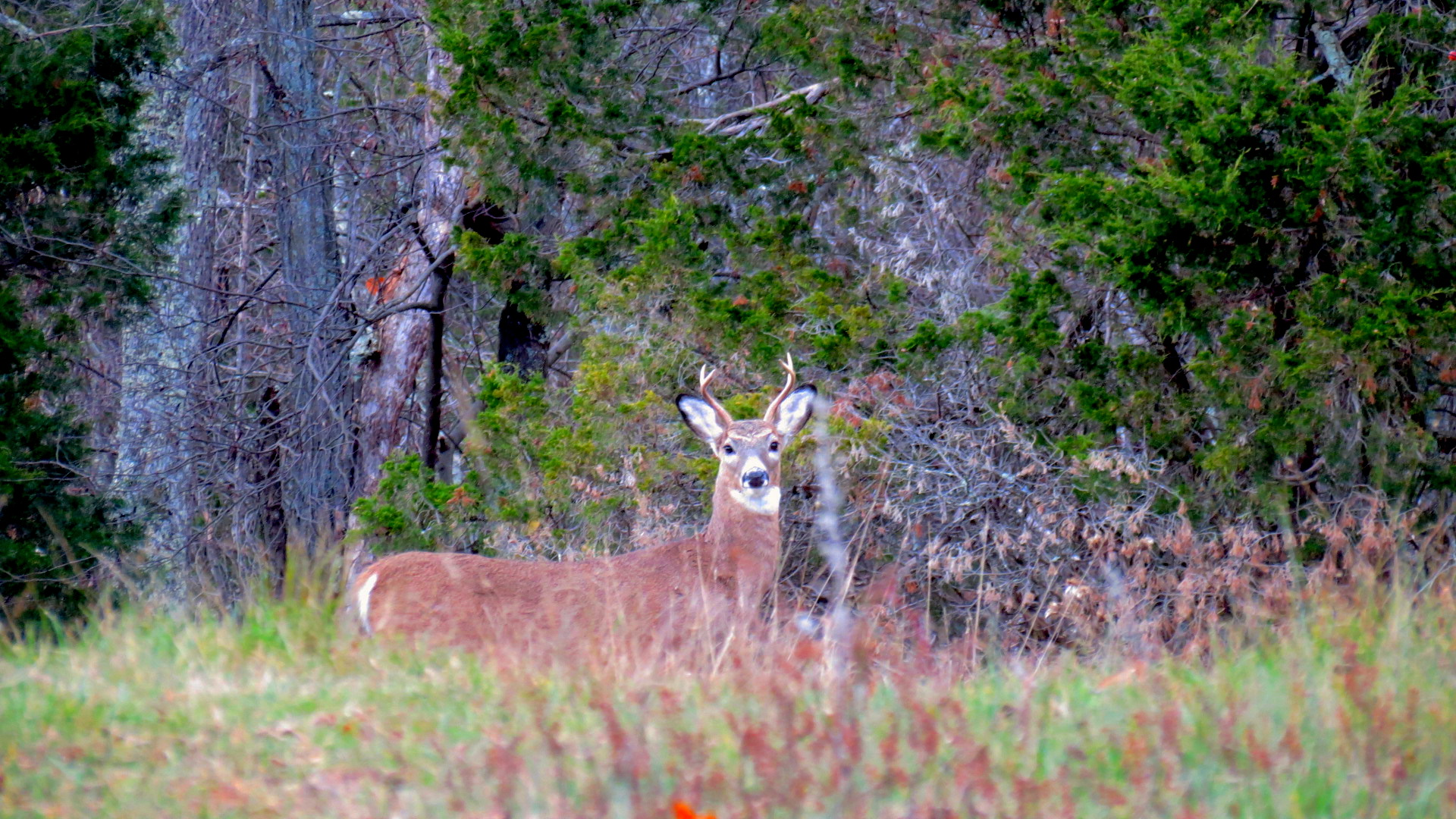 deer1_West Virginia, Hampshire County 09.2013 TracyLind.JPG