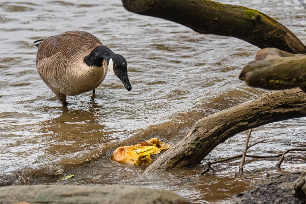 Photo courtesy of William Macfarland, macfarlandphoto.net