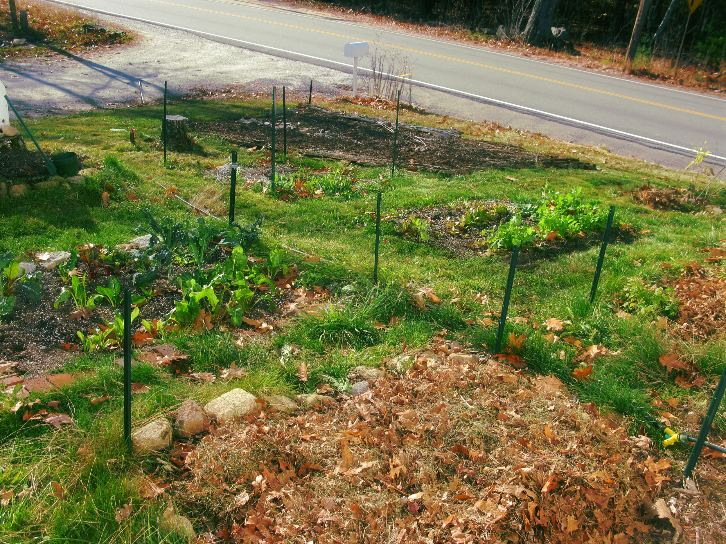 SHredded LEaves Insulate a Vegetable Garden. Photo Courtesy of  FLICKR/RyAn .