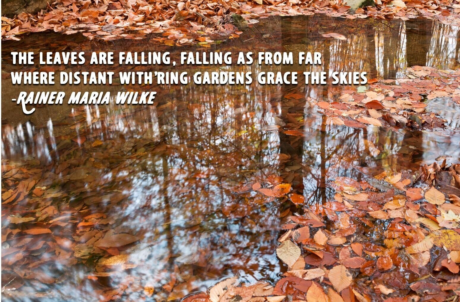 leaves+with+quotation.jpg