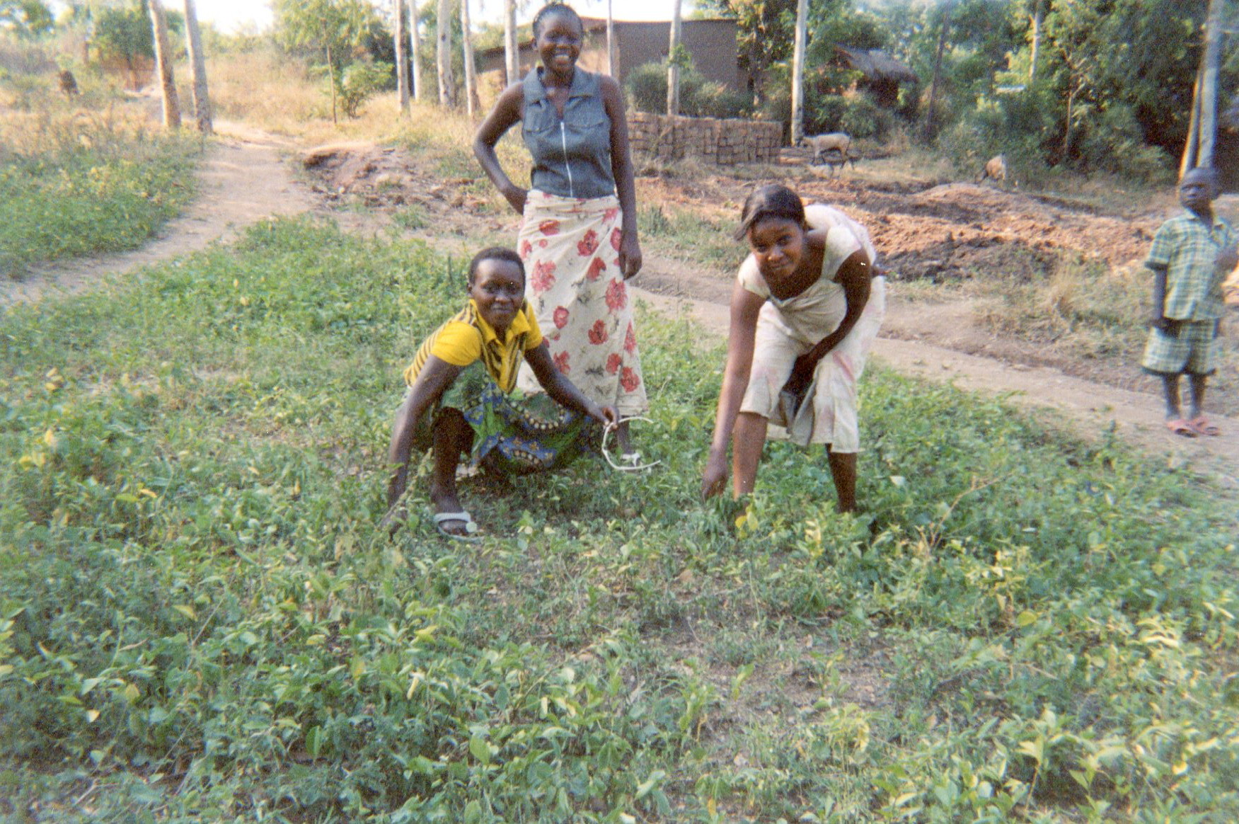 These photos show the ex-combatants in the field and the boys who were reintegrated before are showing the girls how to cultivate crops.