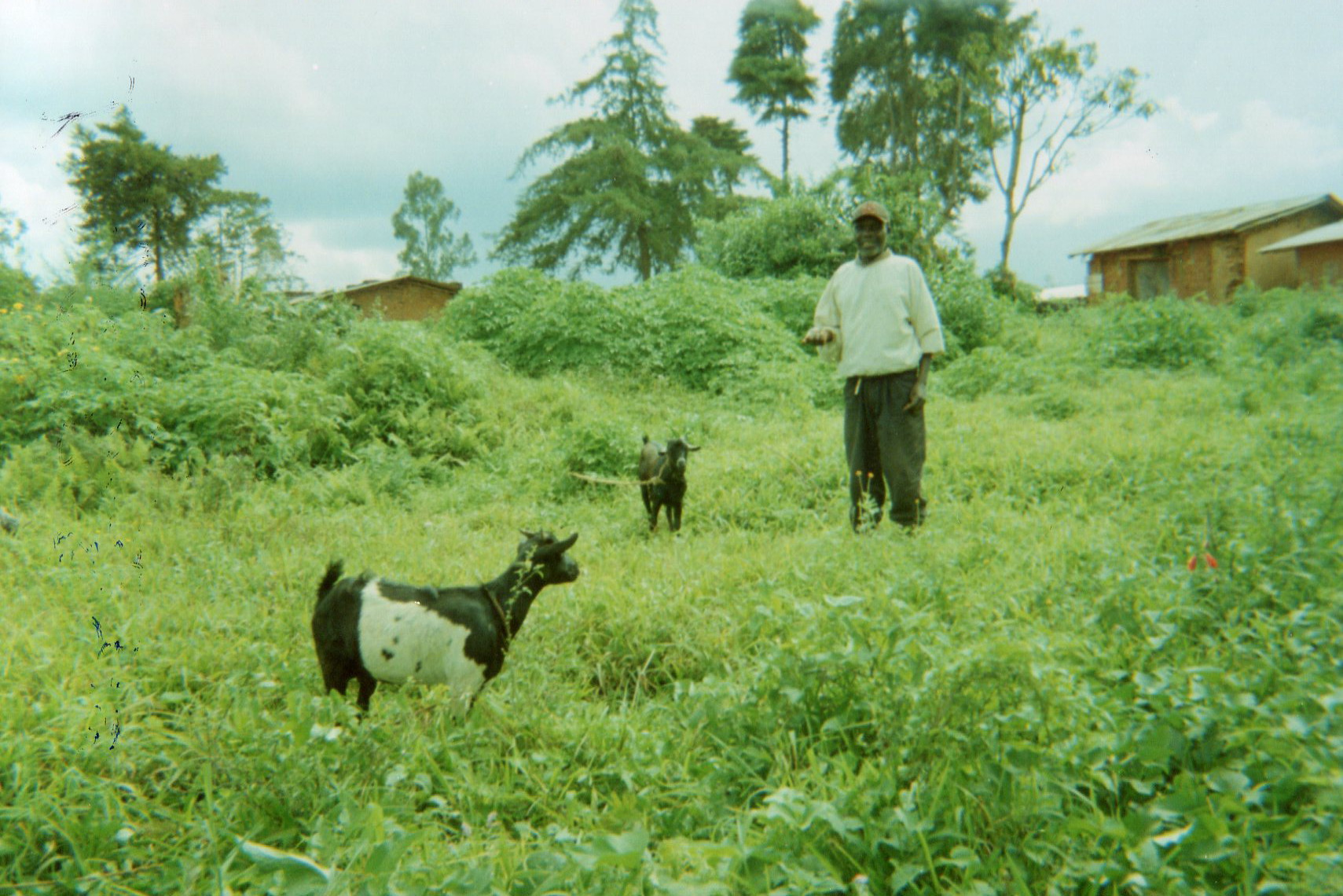 Goat rearing: Welcome.